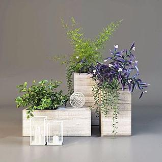 装饰盆栽植物3d模型