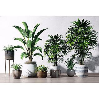 盆栽组合3d模型