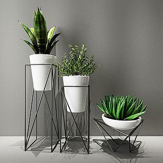 室内绿植盆栽3d模型3d模型图片