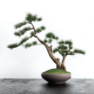 中式盆景3d模型