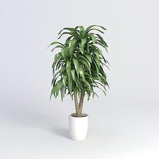 盆栽植物3d模型