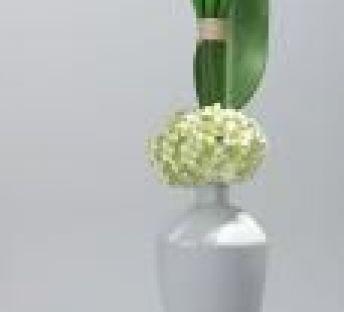 盆栽,装饰