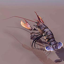 小龙虾模型