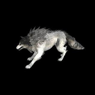 带绑定的狼3d模型