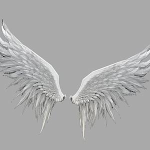 3d白色翅膀模型