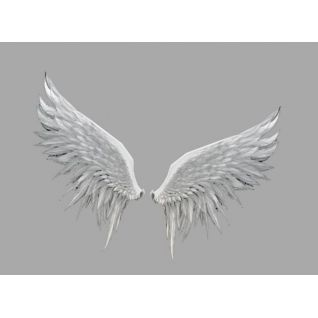 白色翅膀3d模型