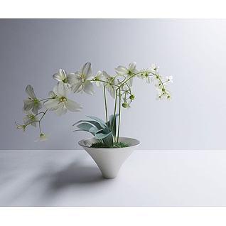 小绿植3d模型3d模型