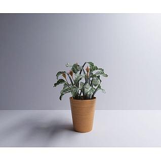 小绿植3d模型