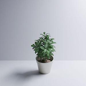 小绿植模型