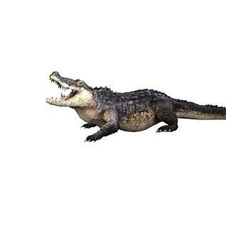 带绑定的鳄鱼3d模型
