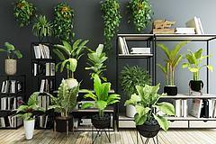 多叶绿植整理1模型3d模型