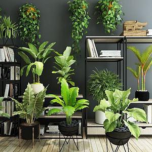 多叶绿植整理1模型
