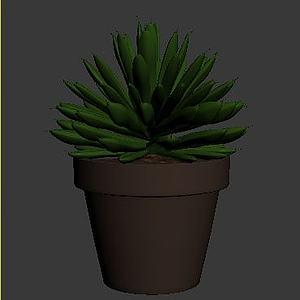 景天科多肉植物银星模型