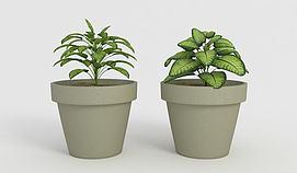 植物盆栽模型