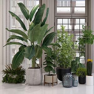 植物花卉盆栽绿植组合模型