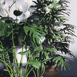 滴水观音盆栽组合模型