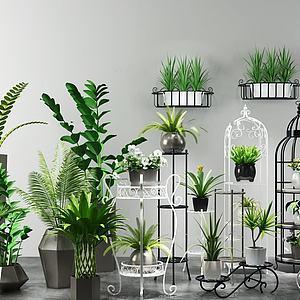鐵藝花架富貴竹盆栽組合模型3d模型