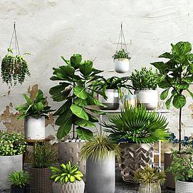 现代吊兰绿植盆栽组合模型