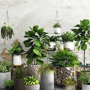 现代吊兰绿植盆栽组合模型3d模型