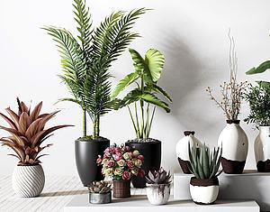 绿植花卉盆栽组合模型3d模型