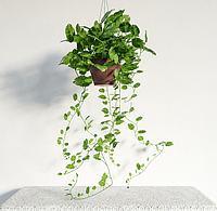 现代吊篮绿植盆栽3d模型