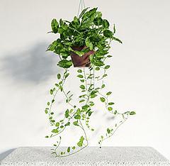 3D模型現代吊籃綠植盆栽