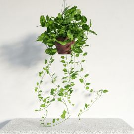 现代吊篮绿植盆栽模型