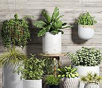 吊兰绿植盆栽组合3d模型