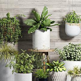 吊兰绿植盆栽组合模型