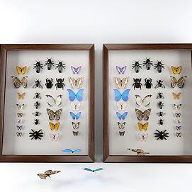 蝴蝶标本模型