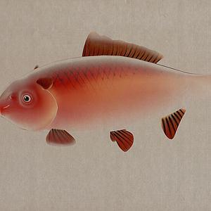 鱼儿装饰模型