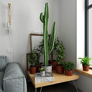 植物组合模型