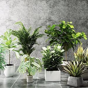 绿植盆栽组合模型3d模型