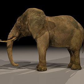 动物大象模型