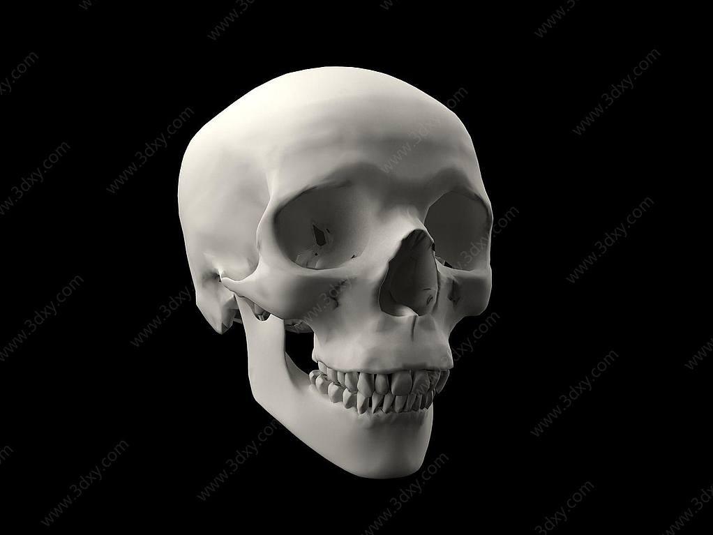 人类头骨骷髅头