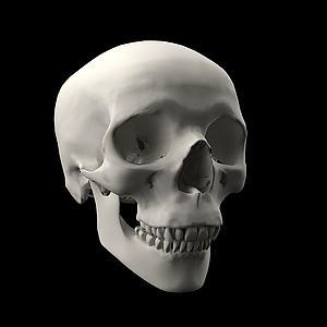 人类头骨骷髅头模型3d模型
