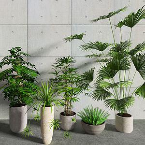 植物盆栽组合模型