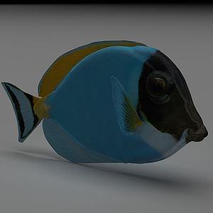 五彩鱼模型