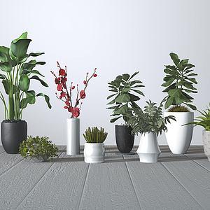 现代植物盆栽组合模型