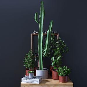 绿植仙人掌盆栽组合模型