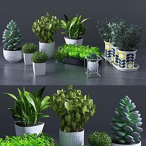 绿植组合模型