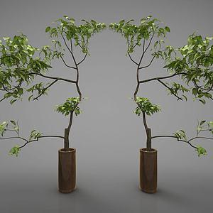 新中式风格盆栽模型3d模型