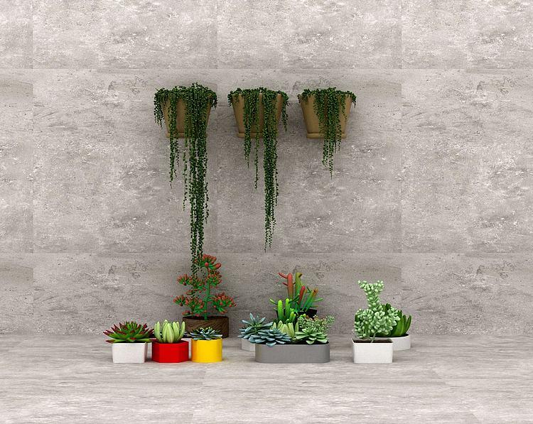 多肉植物模型