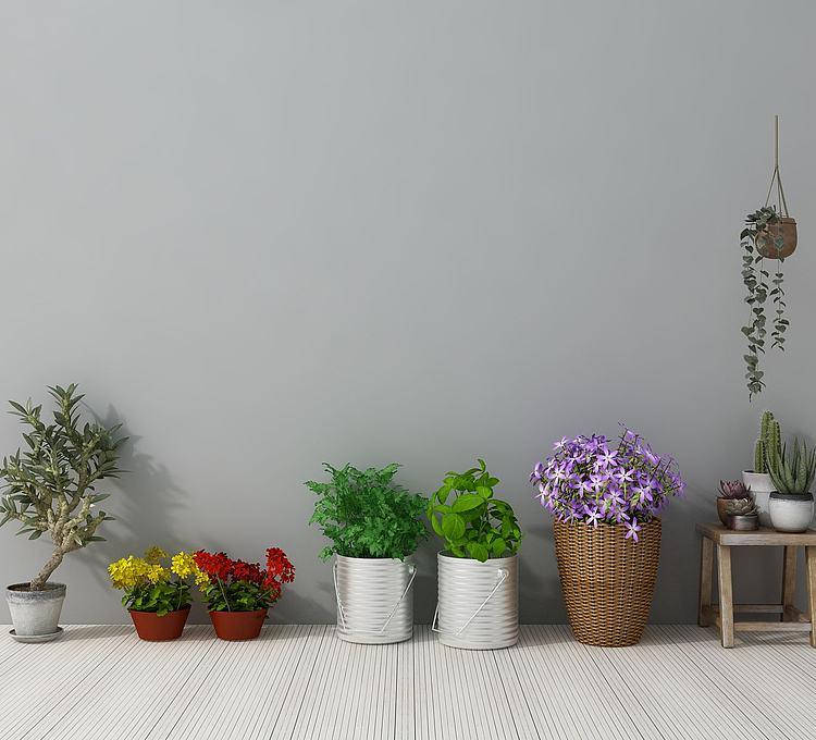 多肉盆栽花瓶
