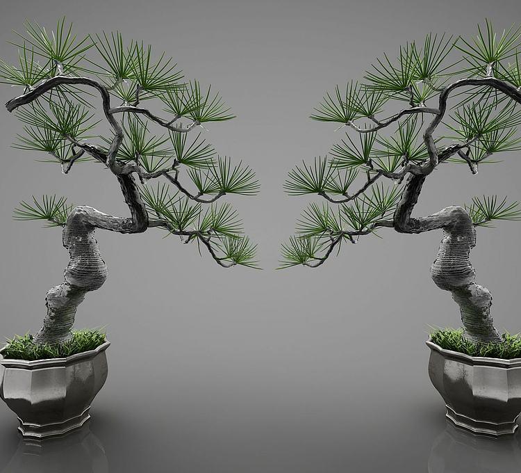 新中式盆栽盆景迎客松