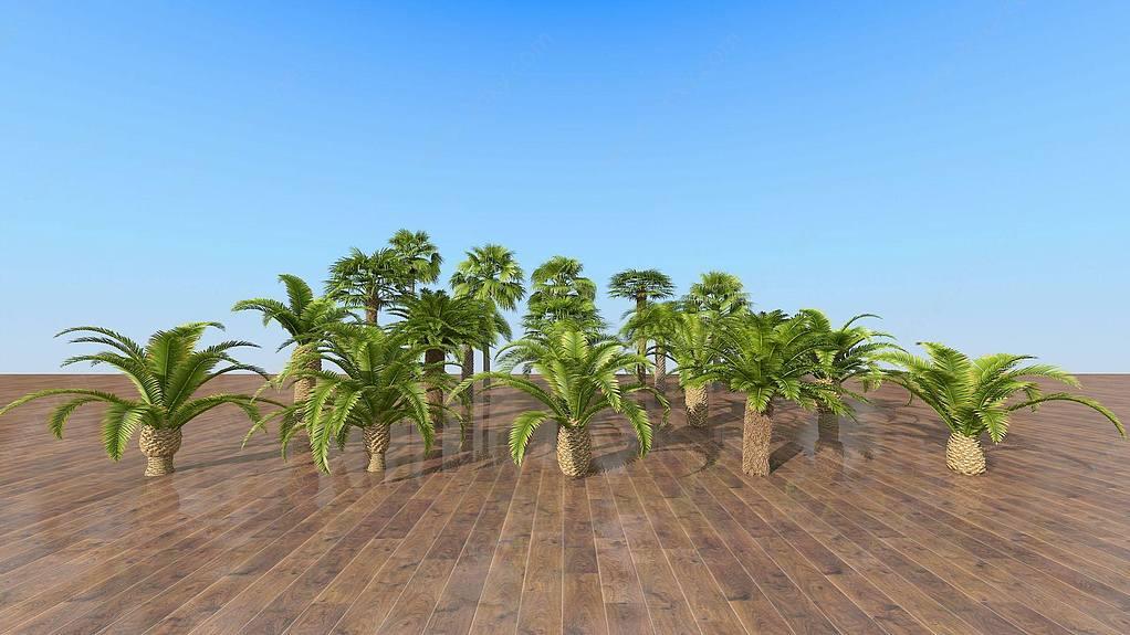 現代室外熱帶樹木組合