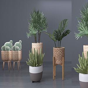 现代多肉植物盆栽3d模型