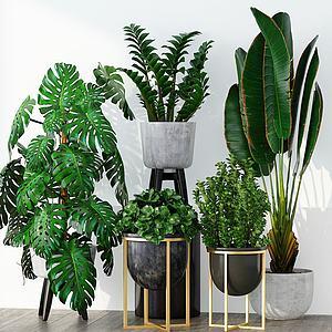 现代绿植组合3d模型