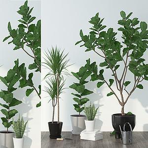 现代盆栽组合模型3d模型