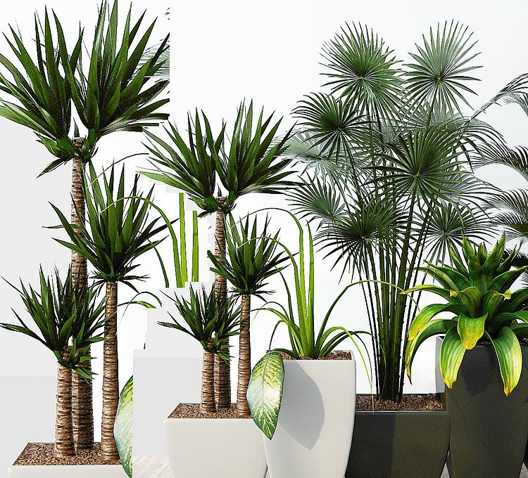 现代绿植组合